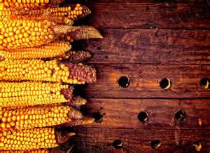 imagem gr 225 tis de espigas de milho em fundo de madeira