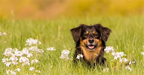 flower power  pets   rescue dogs naturally magazine