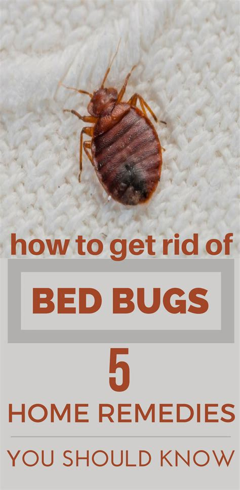 rid  bed bugs  home remedies    topcleaningtipscom