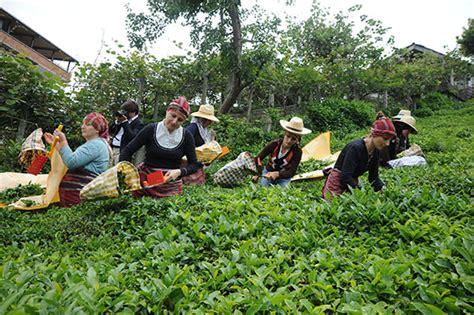 kaaradenizlim karadenizin sesi trabzon rize rtvin giresun 199 aykur kadın mevsimlik iş 231 i almayacak oysa 231 ayı