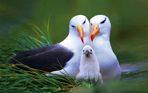 birds family wallpapers 1920x1200 410097