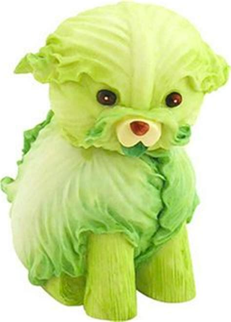 is lettuce bad for dogs this made of lettuce is so