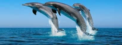 photo de couverture dauphin photo et