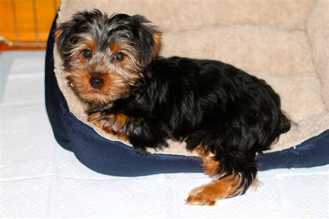 3 month yorkie we a new boy in our house make ahead meals for busy