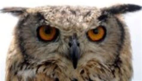 imagenes animales nocturnos la extra 241 a vida de los animales nocturnos el imparcial
