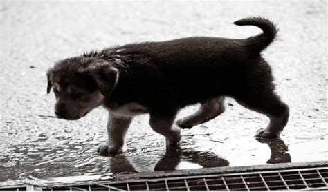 how to get a dog to use the bathroom outside how to get my dog to use the restroom in the rain oak