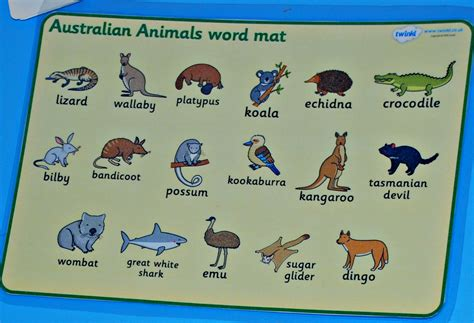 new year names animals australian animal writing practice ofamily learning together