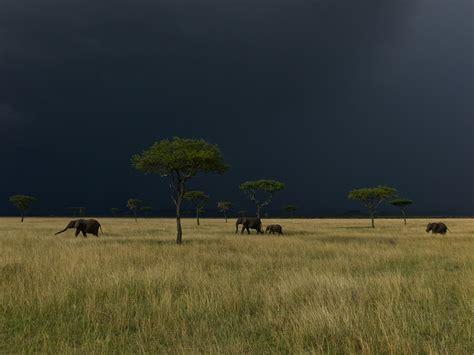 Natgeo Lis elephant picture serengeti photo national geographic