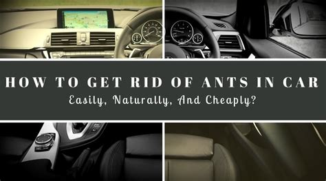 ants in car how to get rid of ants in car easily naturally and cheaply