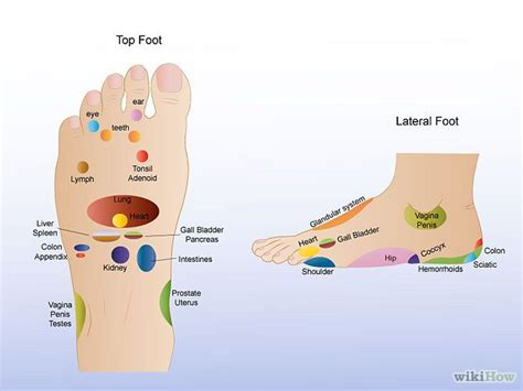 sections of the foot foot reflexology exercise and health pinterest foot