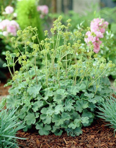 pflanzen um den teich 2980 teich bepflanzen f 252 r ein 228 sthetisches n 252 tzliches 214 kosystem