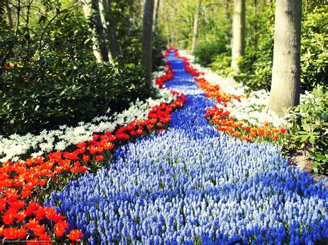 footpath flowers download wallpaper holland flowers road footpath free desktop wallpaper in the resolution