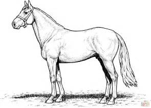 coloring pages of real horses 301 moved permanently