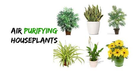 types of indoor plants 25 types of houseplants that clean the air