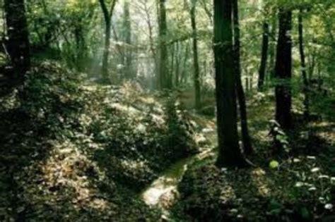 lipu pavia iscrizioni oasi foto di bosco negri pavia tripadvisor