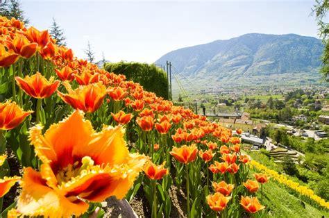 i giardini di maggio parchi e giardini le riaperture di aprile cose di casa