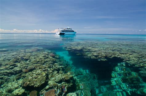 pro dive cairns pro dive cairns cairns tourism town find book