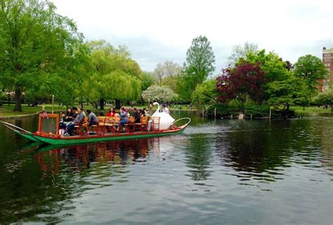 swan boats new york more than swan boats things to do in the public garden