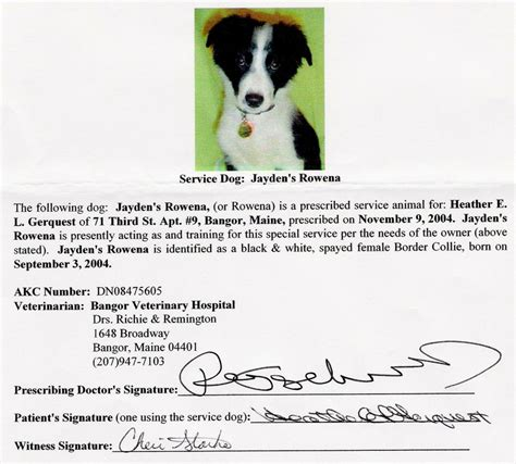 Service Animal Letter My Border Collie Rowena Trials Tribulations Of A Psychiatric Service Handler