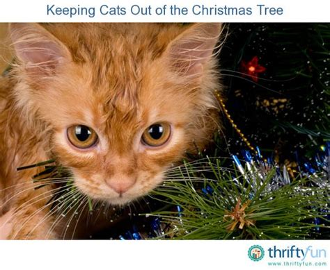 how to keep cats tree keeping out of your tree