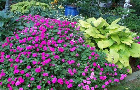 Garden Ideas For Shaded Areas Shade Garden Ideas Photograph Shade Landscaping