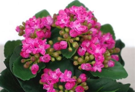 fiori in vaso da interno fiori in vaso fiori per cerimonie fiori in vaso quali