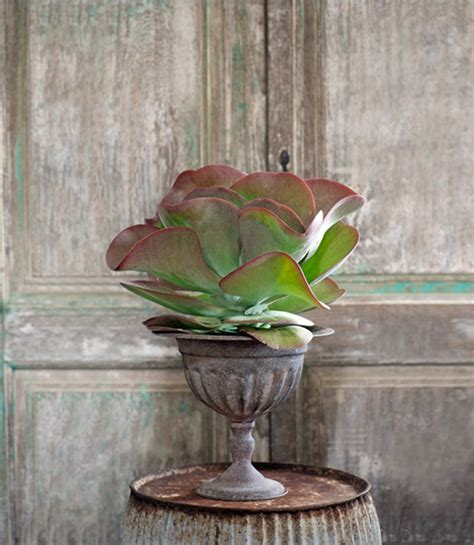 unusual houseplants most unusual indoor plants furnish burnish
