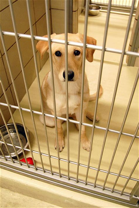 shelter puppies 7 questions to ask a shelter worker when adopting a