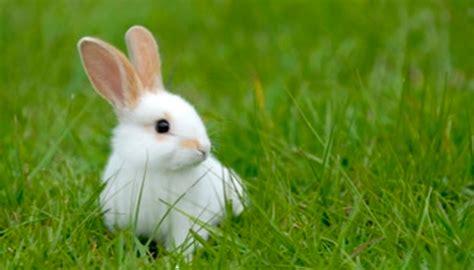 minicuentos de conejos y ventajas y desventajas de tener un conejo como mascota