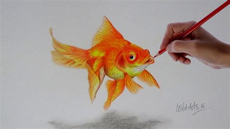 color fish fish goldfish pencil and in color fish goldfish