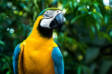 la fauna pictures flora y fauna de tapachula desc 250 brela y marav 237 llate blog hoteleus