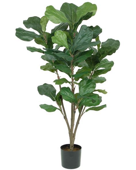 in door plants pot three four plants argements 17 best ideas about fiddle leaf tree 2017 on fiddle leaf fig tree indoor tree