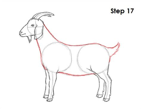 how to draw new year goat how to draw a goat