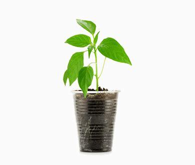 jual pot tanaman tokopedia