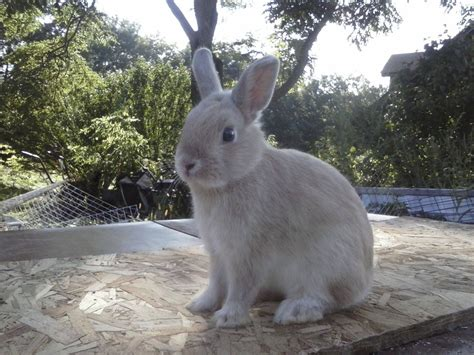 Dwarf Rabbit Care: A Guide for Pet Owners   Coops & Cages