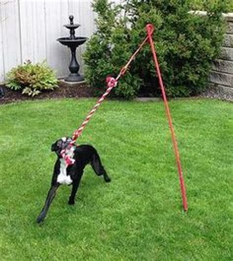 backyard dog toys 1000 images about backyard ideas for dogs on pinterest