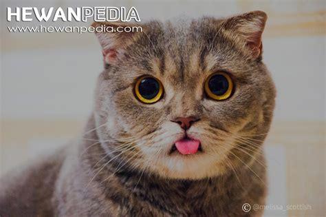 Sho Kucing Yang Bagus 6 cara paling efektif untuk membuat kucing gemuk dan sehat