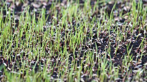 Grass Seed by Certified Arborists Tree Experts Around Philadelphia