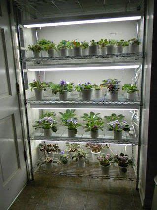 african violet plant light stand shelf