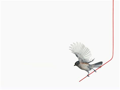 powerpoint themes birds bird on a red wire for powerpoint templates ppt