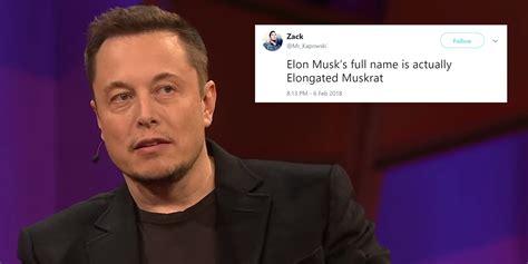 elon musk brief biography the internet is calling elon musk elongated muskrat now