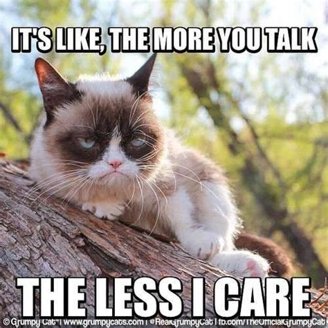 Best Angry Cat Meme - 25 best ideas about grumpy meme on pinterest grumpy cat
