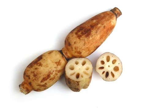 lotus root free stock photo image picture lotus roots