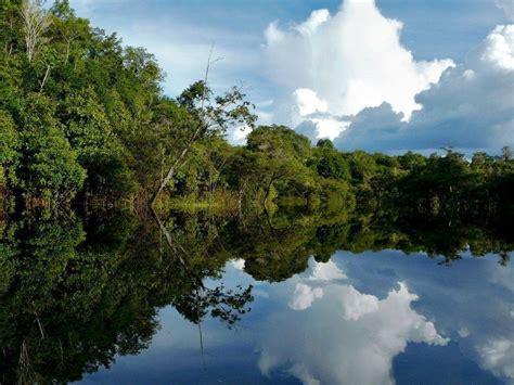 3d amazon amazon rainforest wallpapers wallpaper cave