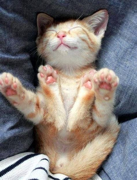 cat pictures top 10 happy cat pictures cutest cats