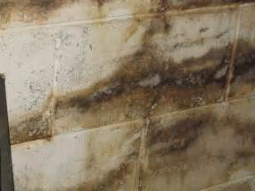 basement mold testing mold in home home mold health problem of mold home mold