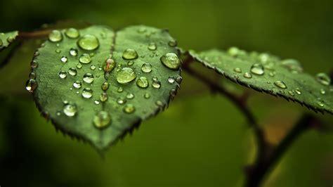 gambar gambar daun  alami   indah