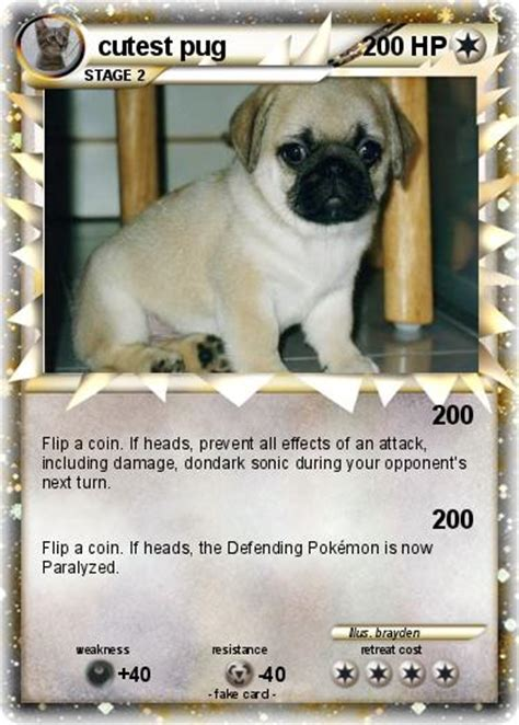 cutest pugs in the world the cutest pug in the world f f info 2017