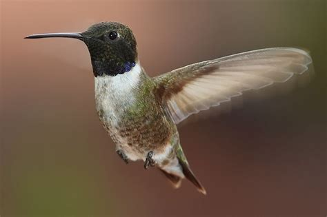 15 different species or types of hummingbirds