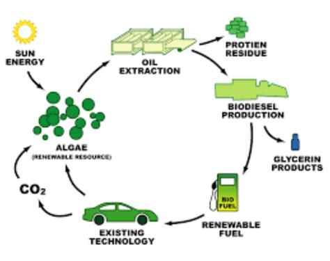 bioetanol rumput laut sebagai solusi energi terbaru masa